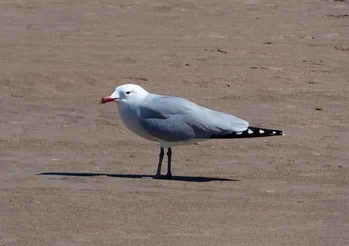 Aves en el Delta del Ebro