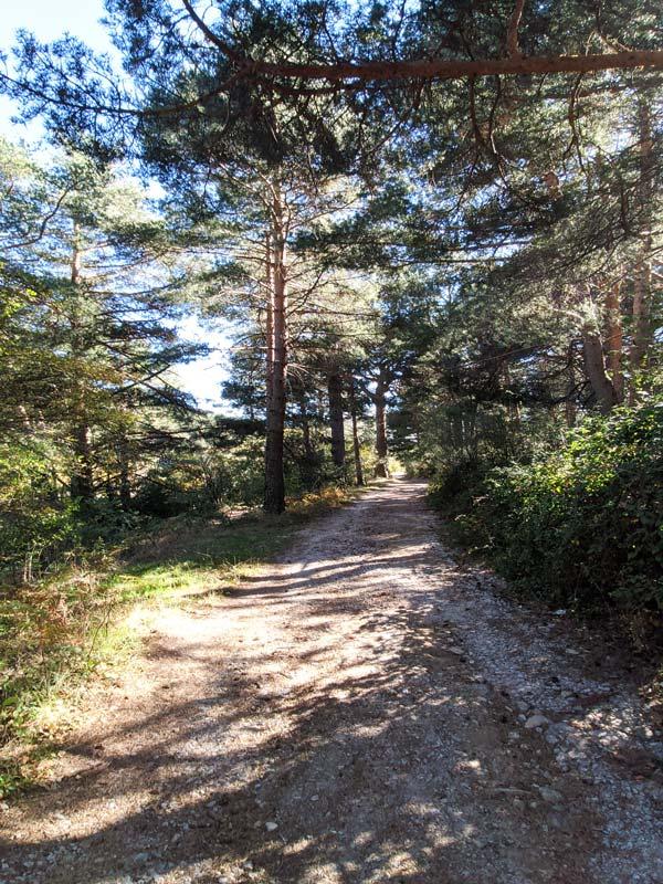 Bosques en Cercedilla