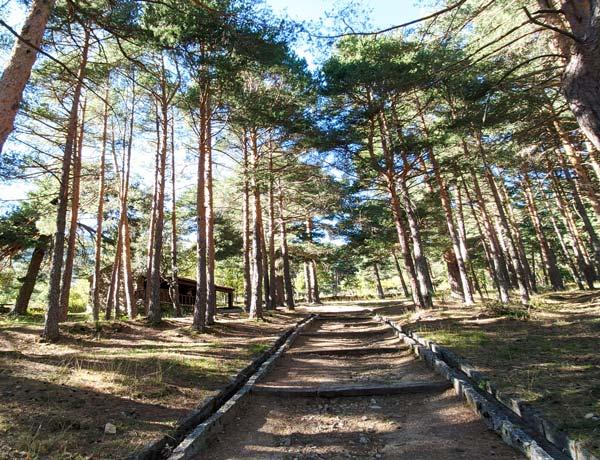 Bosque y cabaña en Cercedilla